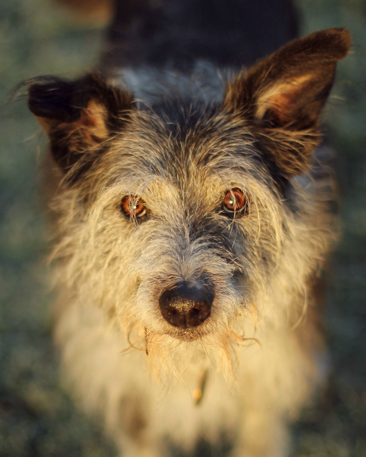 In-shelter assessments: the challenges shelters face in assessing dogs